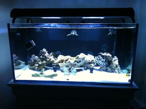 closed loop system pics  benefits reefreef saltwater