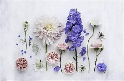 Desktop Flowers Summer Wallpapers Phone Flower Storytelling