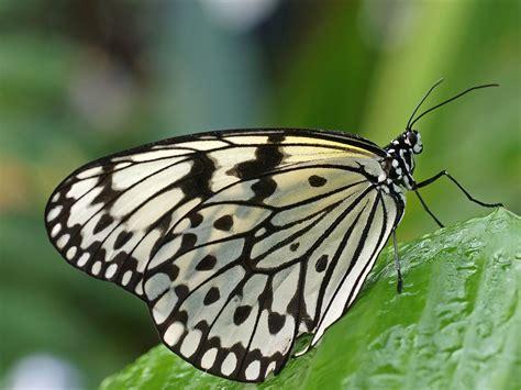 Botanischer Garten München Schmetterlinge tropische schmetterlinge