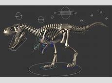 Tyrannosaurus Rex Skeleton 3d model Maya files free