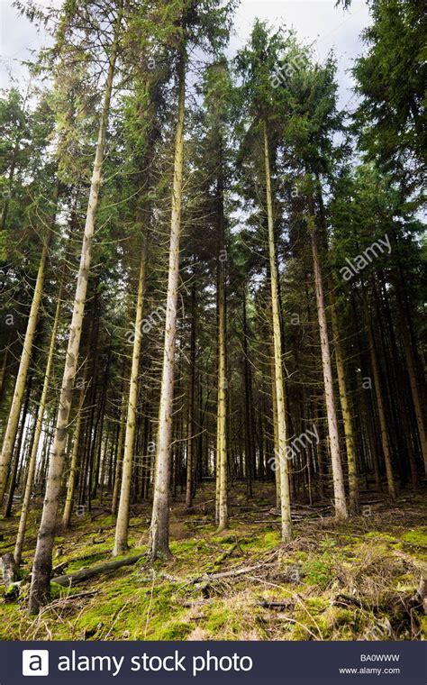 nachbarrecht baden württemberg bäume b 228 ume stockfotos b 228 ume bilder alamy