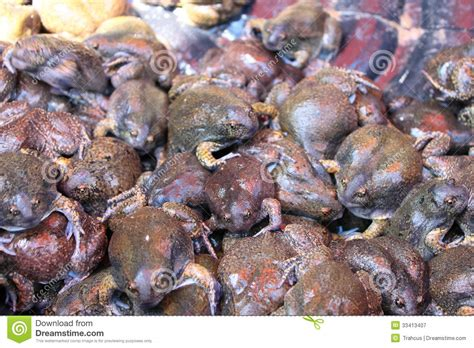 cuisine sold bulk of bullfrog and were sold for food royalty free stock