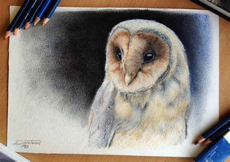 owl color pencil drawing  atomiccircus  deviantart