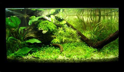 nano aquarium sequa