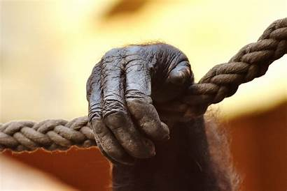 Monkey Gorilla Animal Rope Finger Statue Sculpture