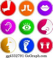body parts stock illustrations royalty  gograph