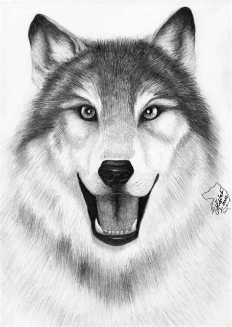 Smiling Wild Wolf Face Tattoo Stencil Photo   Wolf face