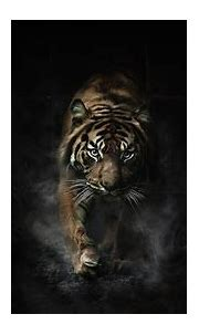 Angry Tiger Eyes Wallpapers - Wallpaper Cave