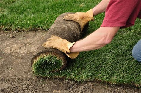 when to lay sod how to lay sod landscaping network
