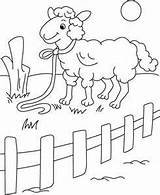 Fence Coloring Pages Picket Sheep Drawing Animals Printable Colouring Rest Animal Domestic Aloof Getdrawings Getcolorings Young Shipping sketch template