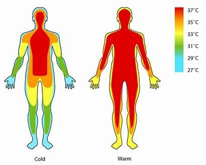Temperature Regulation Normal Regulating Process Low Regular