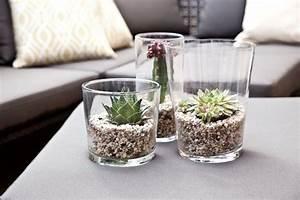 Sukkulenten Im Glas : pflanzentrend des jahres sukkulenten pflanzen ~ Watch28wear.com Haus und Dekorationen