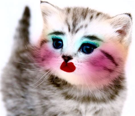 52 Best Images About Animals Wearing Makeup On Pinterest