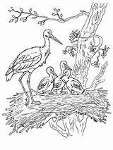 Coloring Stork Pages Birds 1000px Printable Colors Recommended sketch template