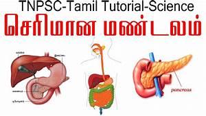 Tnpsc Tamil Tutorial