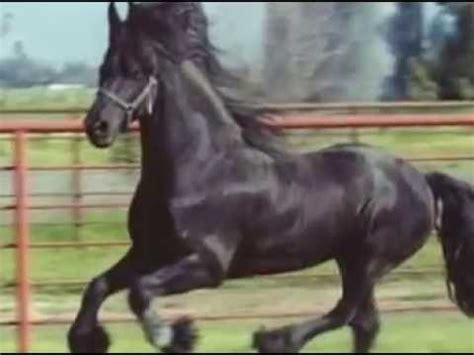 video cheval youtube