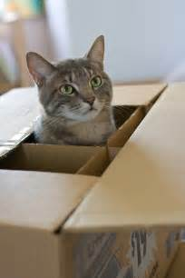 Cat Moving Boxes