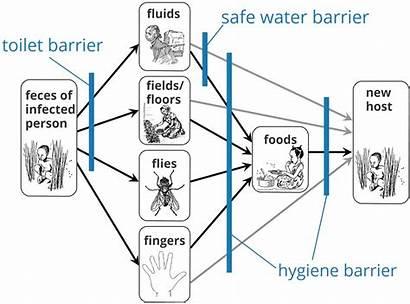 Diagram Water1st Water Dysentery International Disease Transmission