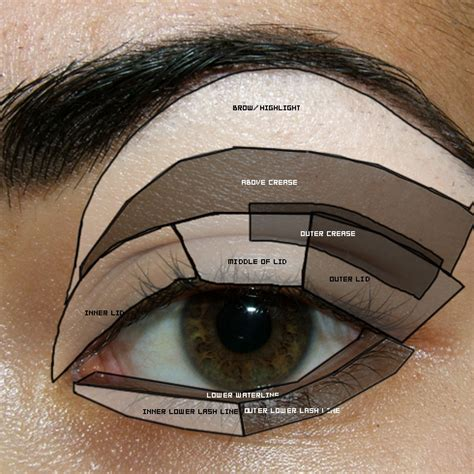 Diagram For Eye Makeup by Tutorial Reference Eye Diagram Parts Of The Eye