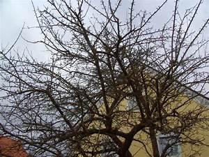 Apfelbaum Schneiden Sommer : vernachl ssigten apfelbaum schneiden seite 2 garten ~ Lizthompson.info Haus und Dekorationen