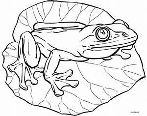 Cute Frogs Drawings - Cliparts.co