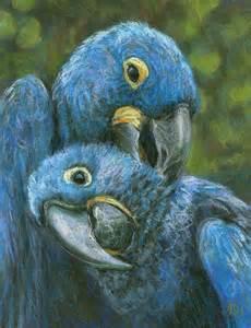 Blue Hyacinth Macaw Babies