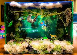 Forest Ecosystem Diorama
