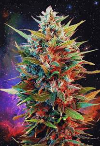 weed plant gif | Tumblr