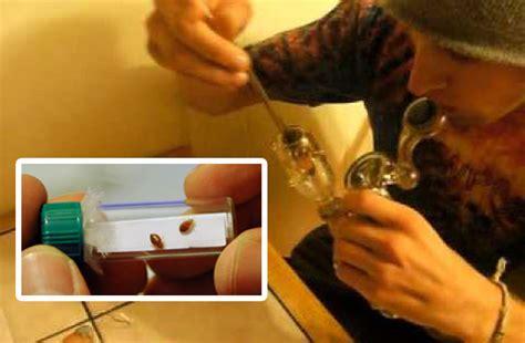 Kids Smoking Bed Bugs To Get High