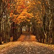 Image result for Autumn wallpaper for Kindle