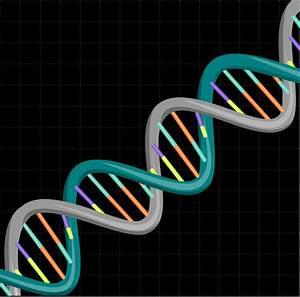 DNA Free Vector / 4Vector