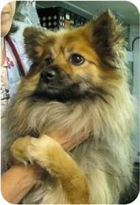 Alphie | Adopted Dog | 13497978 | Old Bridge, NJ ...