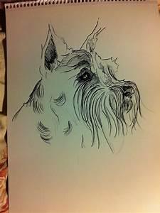 L B 2013  Schnauzer Drawings
