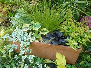 Fleur D Hiver Pour Jardinière : id es jardini res plein soleil ~ Dailycaller-alerts.com Idées de Décoration
