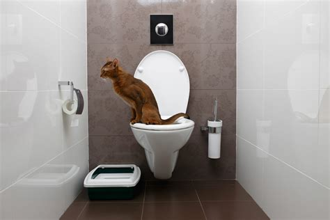 Bilder Für Die Toilette by Moderne Toilette Was Zeichnet Sie Aus Herold At
