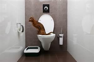 Rohrreiniger Für Toilette : moderne toilette was zeichnet sie aus ~ Frokenaadalensverden.com Haus und Dekorationen