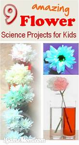 Science projects for kids, Amazing flowers and Science ...