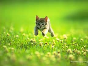 cats grass the kitten on a grass wallpapers and images wallpapers