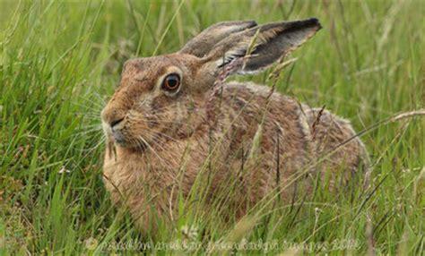 cuisiner le lapin de garenne ne confondez plus le lapin de garenne et le lievre