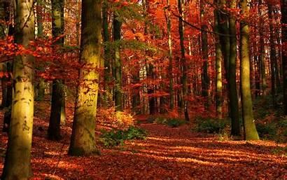 Forest Autumn Desktop Widescreen Bing Fall Wallpapers