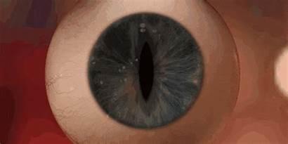 Eye Pupil Dilation Animated Stare Creepy Explains