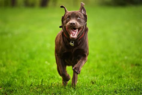 dont worry dog zoomies  normal dog training nation