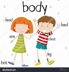 Human Body Parts Diagram Illustration  U30d9 U30af U30bf U30fc U753b U50cf U7d20 U6750 386901625