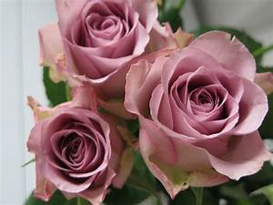 Vieux Rose Couleur : les fleurs du dimanche matin roses vieux rose ~ Zukunftsfamilie.com Idées de Décoration
