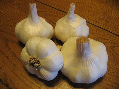 garlic growing guide seedwise seedwise