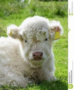 Baby, Cow, Stock, Photo, Image, Of, Environment, Buffalo, Green