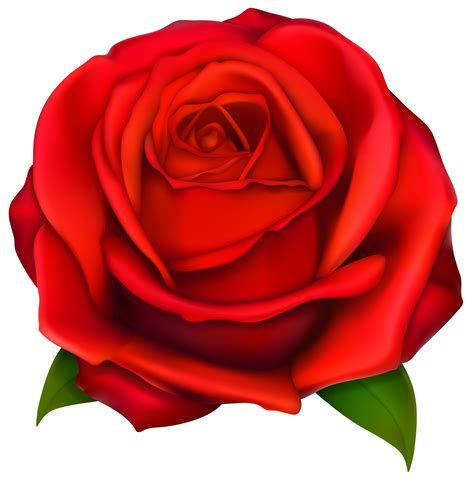 Images Of Rose  Clipart Best