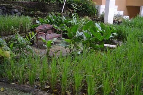 Immergrüne Gräser by Startseite Garten Buddha