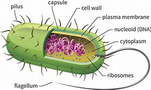 The Fascinating World Of Cell Organelles And Their