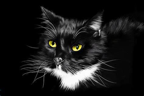 Domestic Black And White Cat Digital Art By Julie L Hoddinott